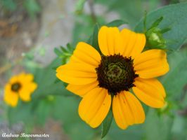 Yellow Flower V by Andrew-Bowermaster