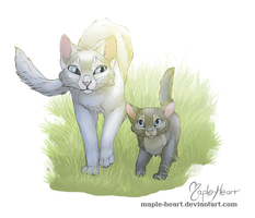 Frostfur and Cinderpelt by Maple-Heart