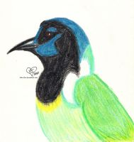 Green Jay by Roki-Ziro
