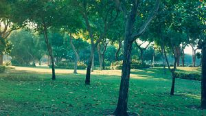 Trees by praveen3d