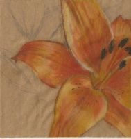 Orange Lilly by element7374