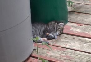 New kitten sleeping by Ripplin