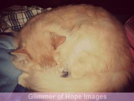 Sleeping kitty by GlimmerofHopeImages