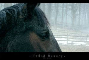 faded beauty by equusrevelrous