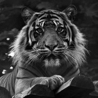 Portrait of a Tiger by Yslen