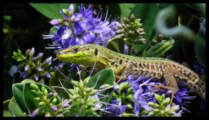 Dragon in the Flowers by samwyse