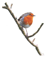 Robin On a Branch PNG.. by Alz-Stock-and-Art