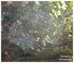 Another Spider Web by TheMan268