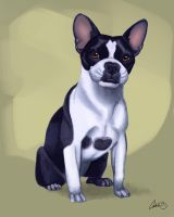 Buddy Boston Terrier Commission by CharReed