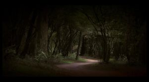 Through the forest ... by MOSREDNA