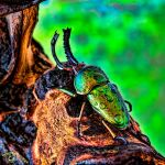HDR Beetle by FauxHead