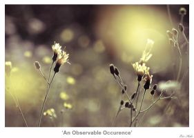 An Observable Occurence by MrColon