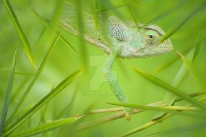 Chameleon by Spanishalex