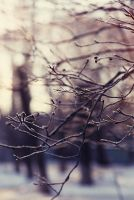 Frosty trees in the morning by Alhor-Ern