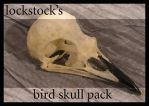 Bird Skull pack by lockstock