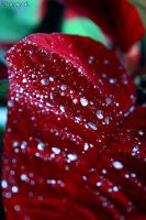 Raindrops On A Leaf by iMargreet