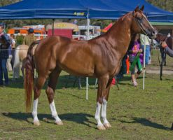 STOCK - Canungra Show 2012 004 by fillyrox