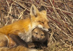 Mother and Kit 2 by Les-Piccolo