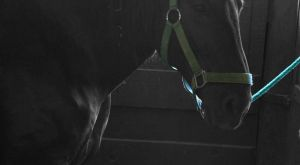 Horse in Stable: Color Enhanced by Beautiful-Dreamer602
