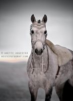 Cinderella Horse by A-Motive