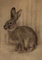 rabbit sketch by moussee