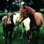 Horse Group by nectar666