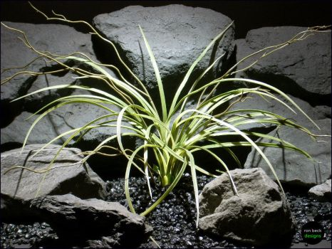 Aquarium Plants Mad Grass by Ron Beck Designs by ronbeckdesigns