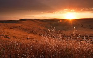 Palouse Sunset 9 by krovakny