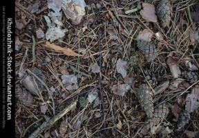 Forest Floor stock #01 by Khudozhnik-Stock
