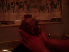 Dog Baths Are Evil by Cleverun