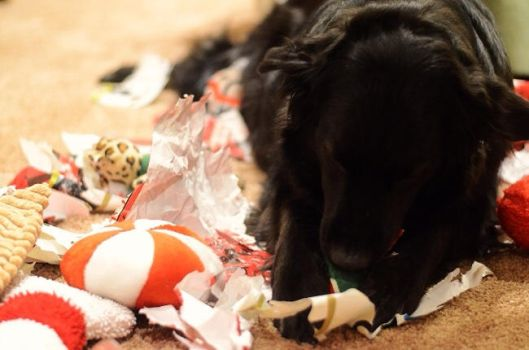 Unwrapping the presents by Night--Raven