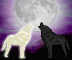 Howling by the-black-wolf-co-uk