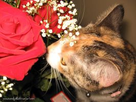 Stop to Smell the Roses by nanecakes