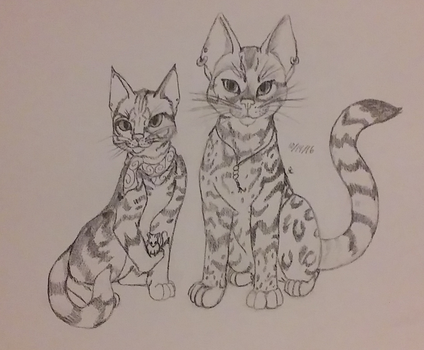 Cat Forms by Ashfur15