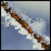 ice twig by Bandit83