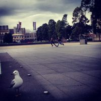 The couple and The Gull by docyboy123