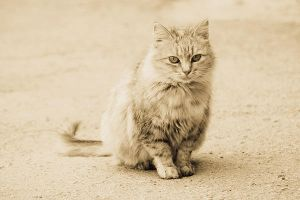 cat at the street by Emmatyan