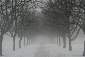 Fog Stock by AnnieSue-stock