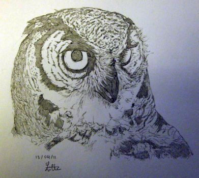 Owl by charcoal-almighty