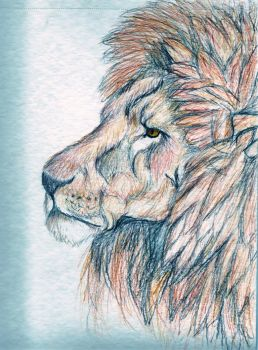 lion part 1 by InnocentThora