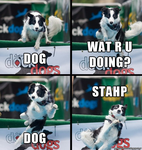 Dog wat r u doing... by GAGmemeTRON