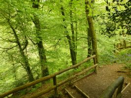 Lydford Gorge: View 92 by yaschaeffer