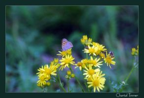 A Butterfly Afternoon by ischarm