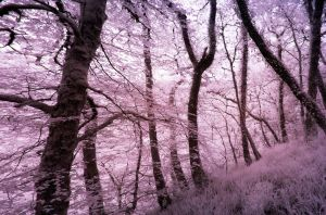 Lydford Gorge in Infra-Red: Colour 12 by yaschaeffer