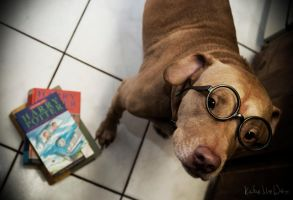 Potter Puppy by maetastic