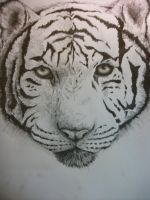 White Tiger Sketch by GhilliedNinja