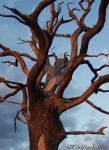 dead tree 64 by Gwitha-Kathes