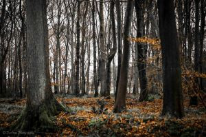 Naked Trees, Golden Leaves... by DeoIron
