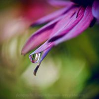 last tear of summer by prismes