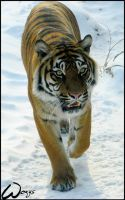 Snow in Sumatra? by woxys